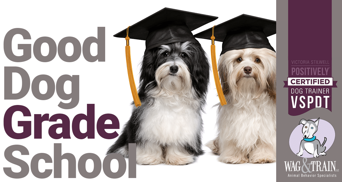 Good Dog Grade School - Wag and Train Colorado Adult Dog Training
