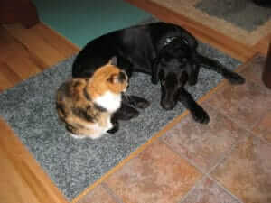 A Client's Story: Patience and Management are Key to Introducing a New Dog to Resident Cats