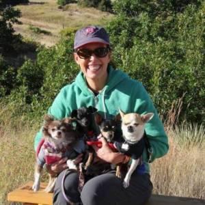 Chihuahua Dog Training Denver