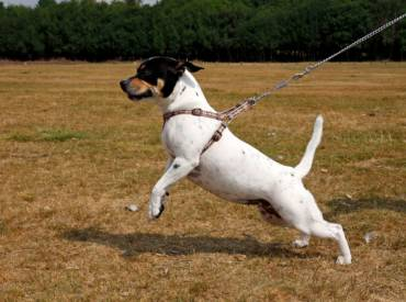 Puppy Class Extras – Leash Walking 101