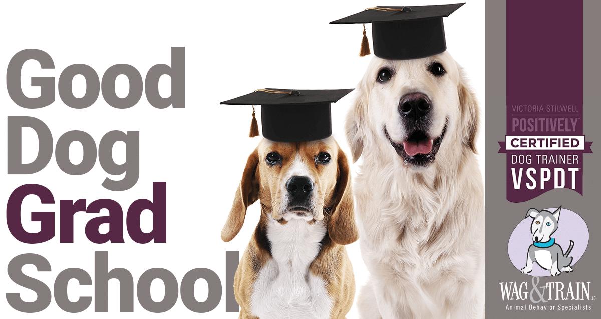 Colorado Good Dog Grad School - Adult Dog Training Wag and Train