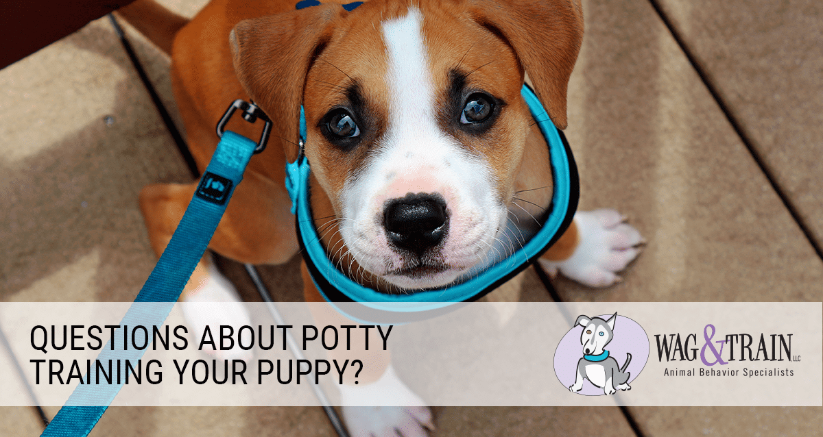 wag and train puppy potty training Colorado