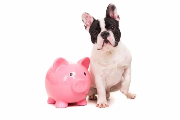 50% Deposit One-On-One Dog Training