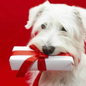 Wag and Train Gift Card
