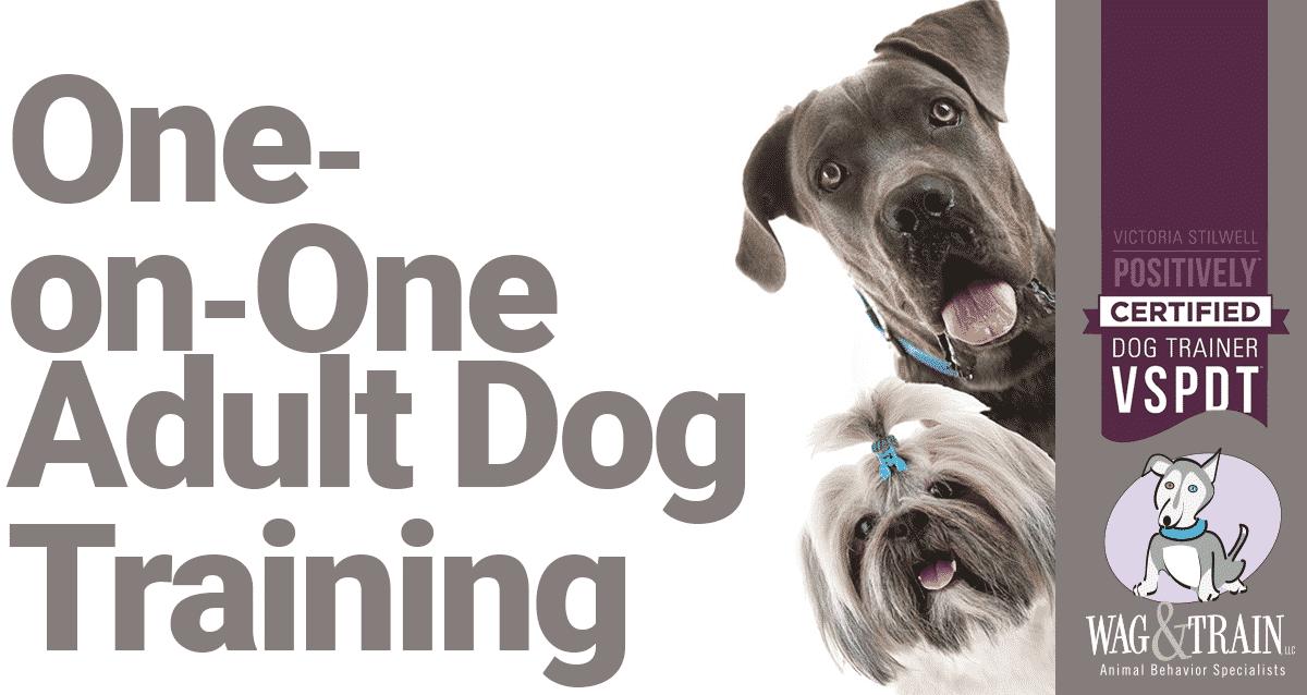 Minneapolis Adult Dog Training One-on_one Kari Bastyr