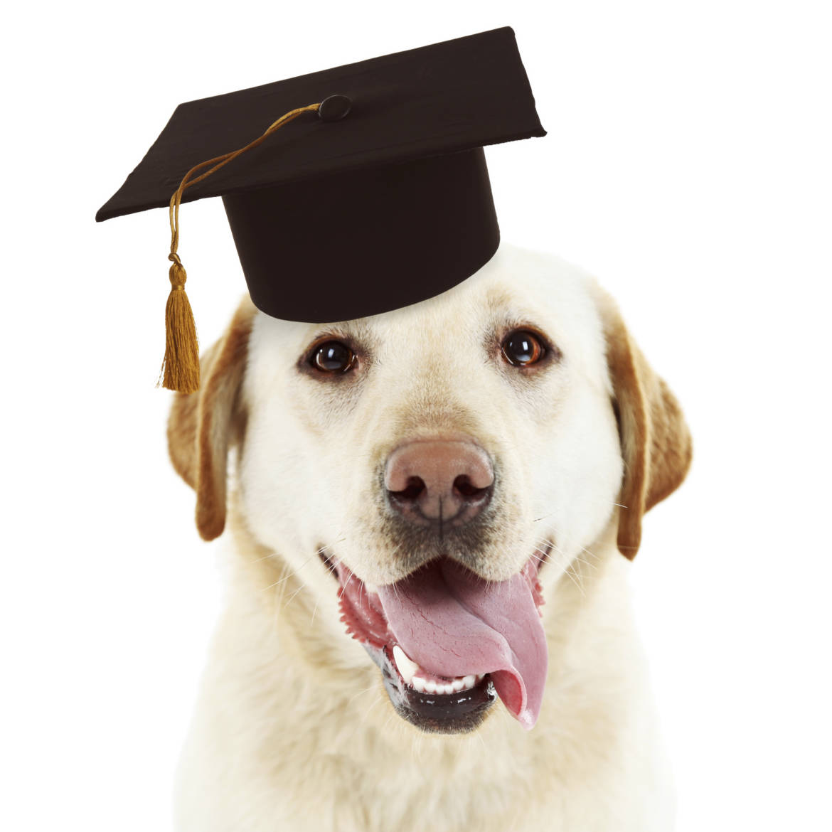 Dog Graduation Cap And Gown Pattern - Famous Dog 2018