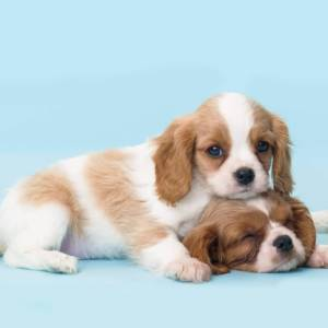 October Puppy Class in Boulder
