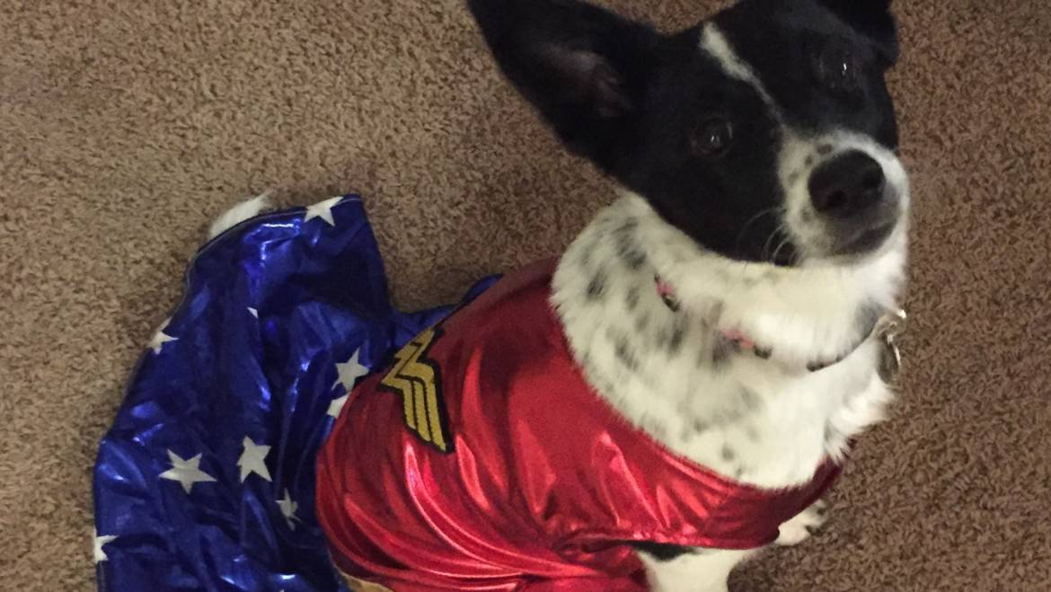 Named after Kirby Puckett, this wonderdog has big shoes to fill!