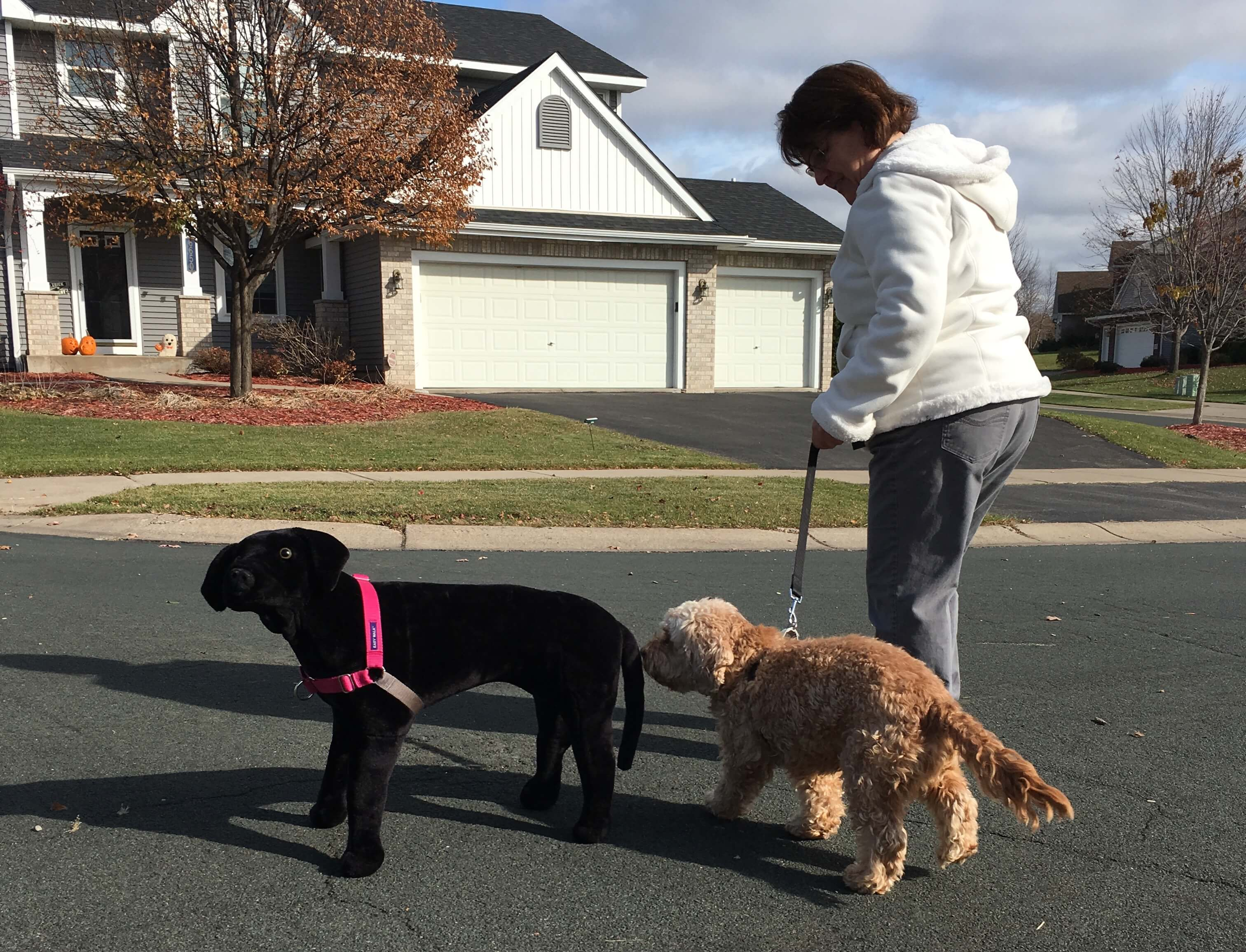 Minneapolis In Home Dog Training
