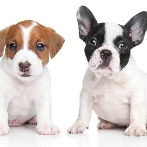 2 Puppy Pack