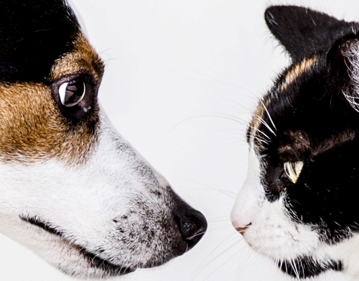 Keeping the Peace: How to Introduce and Manage Dogs and Cats who Live in the Same House