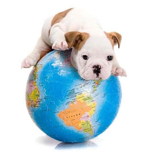 Puppy Class Extras – Understanding Dominance