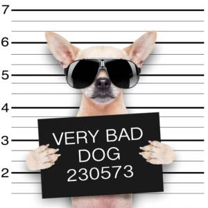 bad dogs wanted