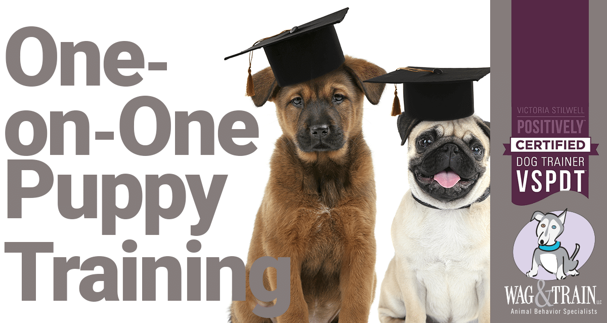 PUPPY TRAINING MINEAPOLIS ONE ON ONE