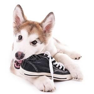 wagandtrain-puppytraining