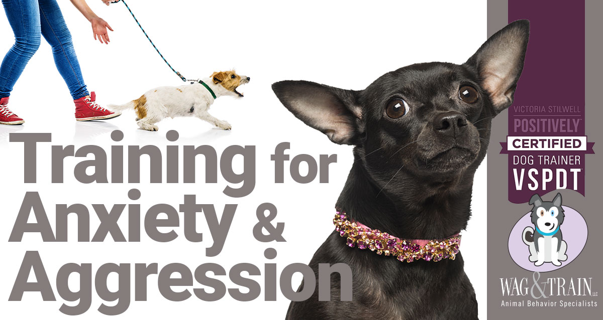 Anxiety Aggression Dog Training Minneapolis Denver Wag and Train